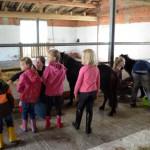Kindernachmittag-kinder-bemalen-ein-pferd-150x150 Kindernachmittage auf unserem Hof