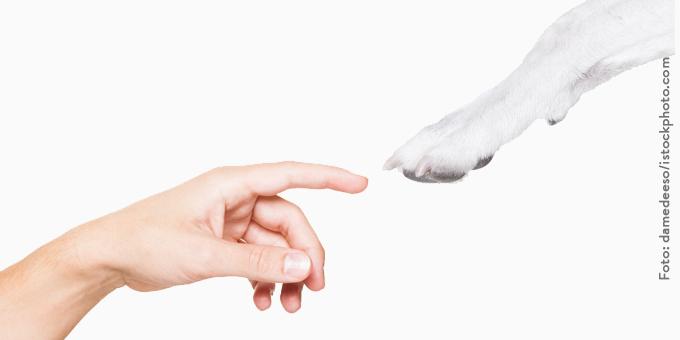 projekte_klein-2 Unternehmer - Sponsoren - Kooperationen im Tierschutz