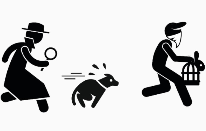 beitragsbild-detektive Laufende Tierschutz-Projekte