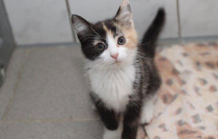 beitragsbild-katzenkuscheln Ehrenamtliches Engagement im Tierschutz