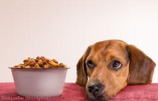 futterpatenschaft-beitragsbild-klein Laufende Tierschutz-Projekte