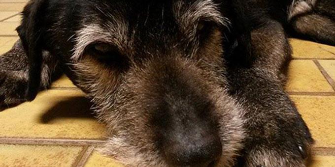 projekt-beitragsbild-aufnahmepatenschaft Tierpatenschaft - Tierheimtiere unterstützen