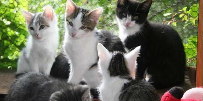 projekt-beitragsbild-katzenstation-münchen Unsere Tierheime im Süden
