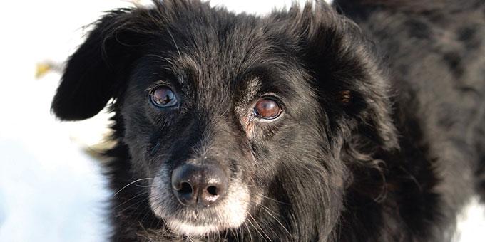 projekt-beitragsbild-rest-des-lebens-patenschaft Tierpatenschaft - Tierheimtiere unterstützen