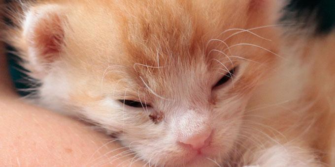 projekt-beitragsbild-start-ins-leben Tierpatenschaft - Tierheimtiere unterstützen