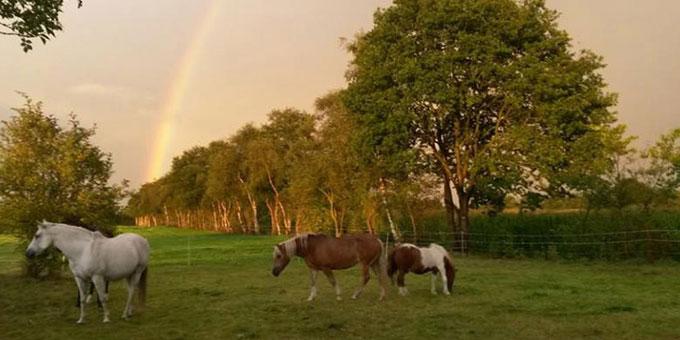 projekt-beitragsbild-tierschutzhof-wardenburg Unsere Tierheime im Norden