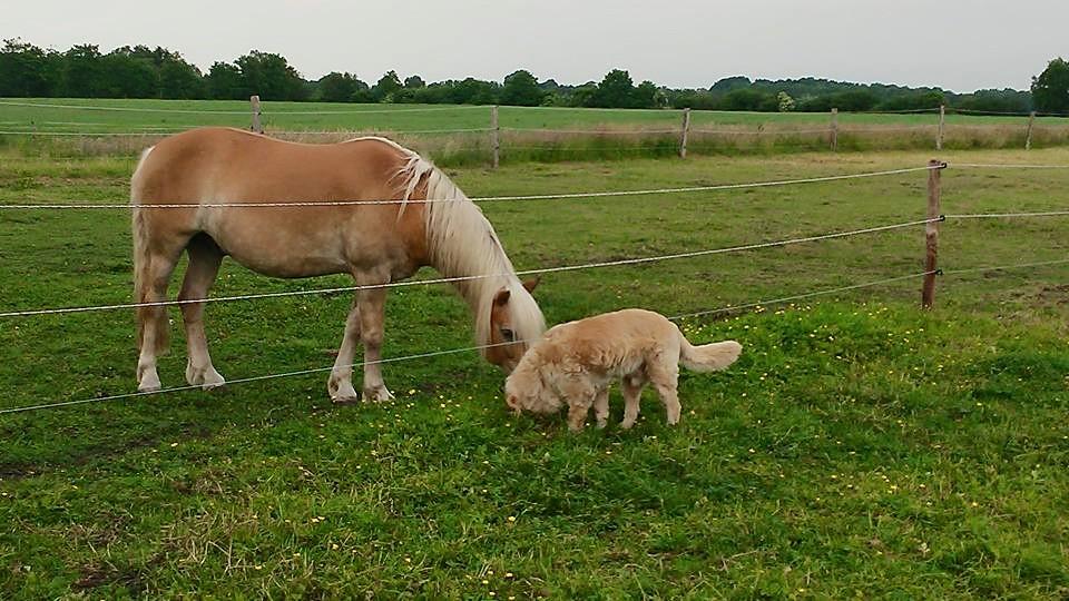 wardenburg-weide-pferd-hund Wochenendseminar mit Carmen Schell