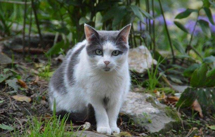beitragsbild-ehrenamt-freilebende-katzen-wald Ehrenamtliches Engagement im Tierschutz