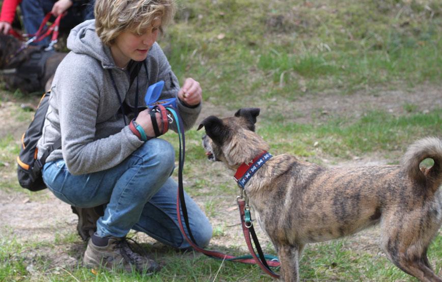 beitragsbild-ehrenamt-gassigeher-frau-hund Ehrenamtliches Engagement im Tierschutz