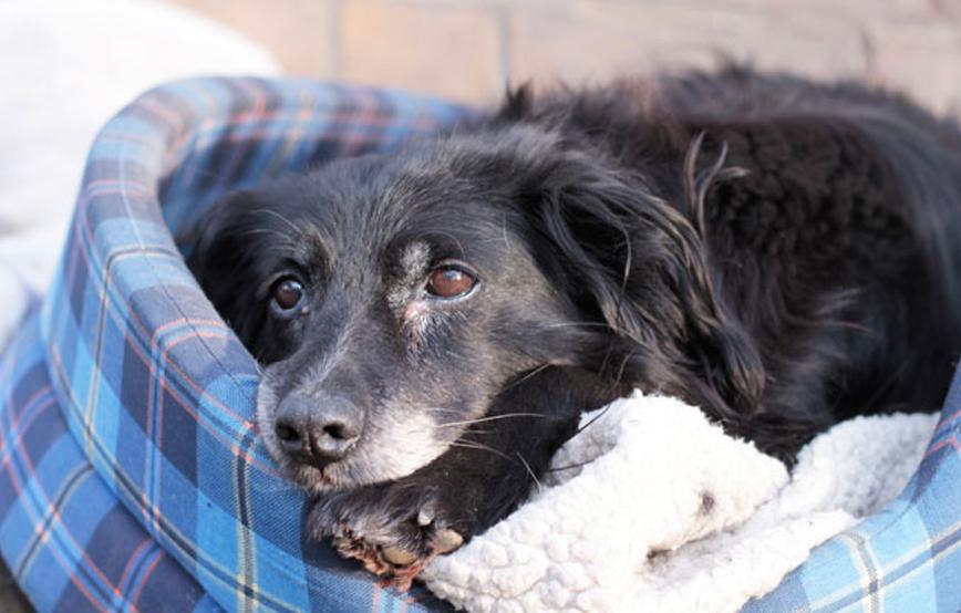 beitragsbild-ehrenamt-pflegestelle-hund-körbchen-neu Ehrenamtliches Engagement im Tierschutz