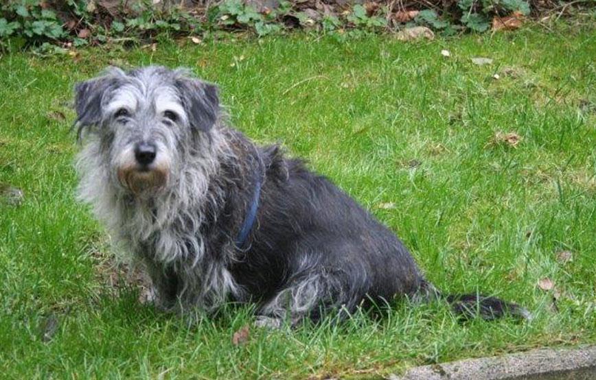 beitragsbild-ehrenamt-platzkontrollen-hund-wiese Ehrenamtliches Engagement im Tierschutz
