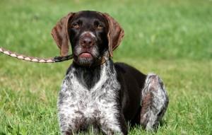 Hund-Pitt-liegt-im-gras-an-der-leine-300x191 Tierschutzliga-Dorf
