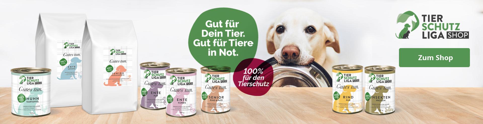 Startseite-Stiftung-Header-Hund Tierheim Wollaberg