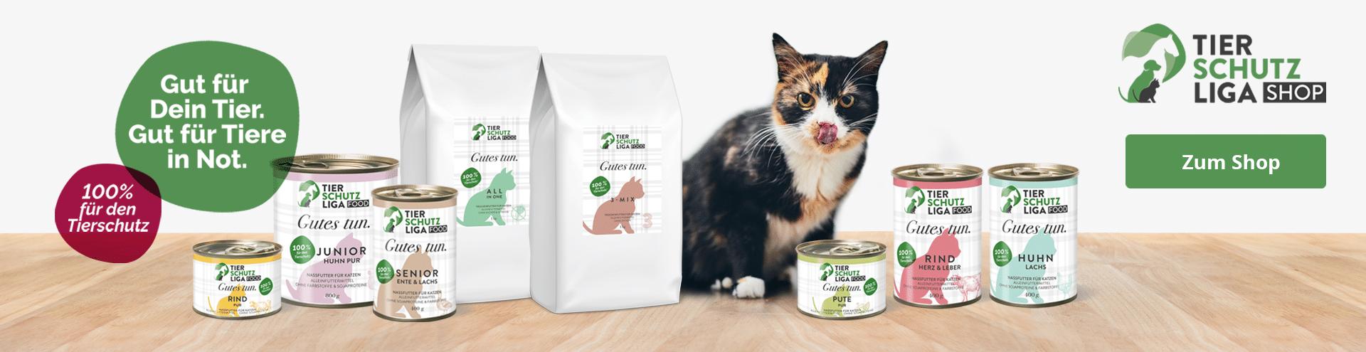 Startseite-Stiftung-Header-Katze Katzenstation Netzschkau
