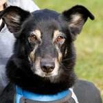 hund-benno-notfall-tierschutzliga-dorf-150x150 Schäferhundmix Benno