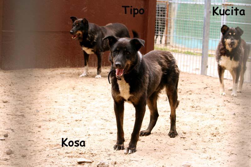 Kosa-9 Was ist eine Tier-Patenschaft