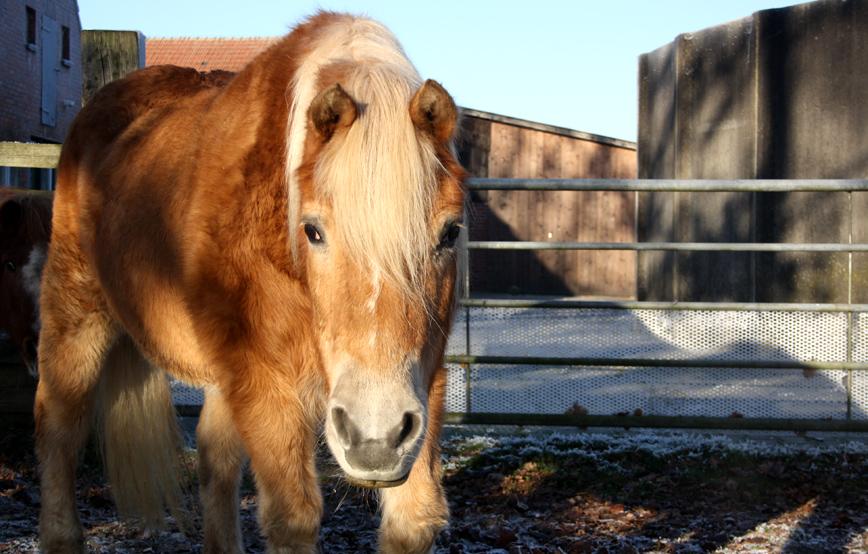 Pferd-maika-vor-zaun Patentiere - Tierschutzhof Wardenburg