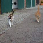 Sonnie-und-ihr-Katzenkumpel-150x150 Sonnie (TK001/15)