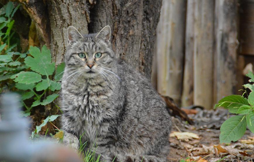 beitragsbild-micky Katzenstation Netzschkau