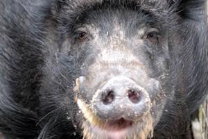 willineu Zuhause gefunden - Tierschutzliga Dorf