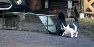 drei-Katzen-Katzenfalle-vor-Auto-Kastrationaktion-300x150 Fördern & Helfen im Tierschutzligadorf
