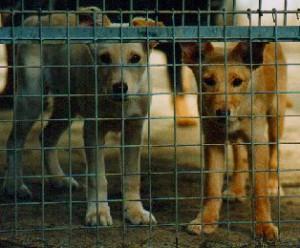 hunde-300x248 Das Dorf - Tierschutzliga Dorf