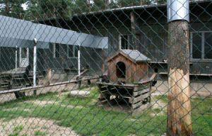 katzenauslauf1-300x192 Das Dorf - Tierschutzliga Dorf