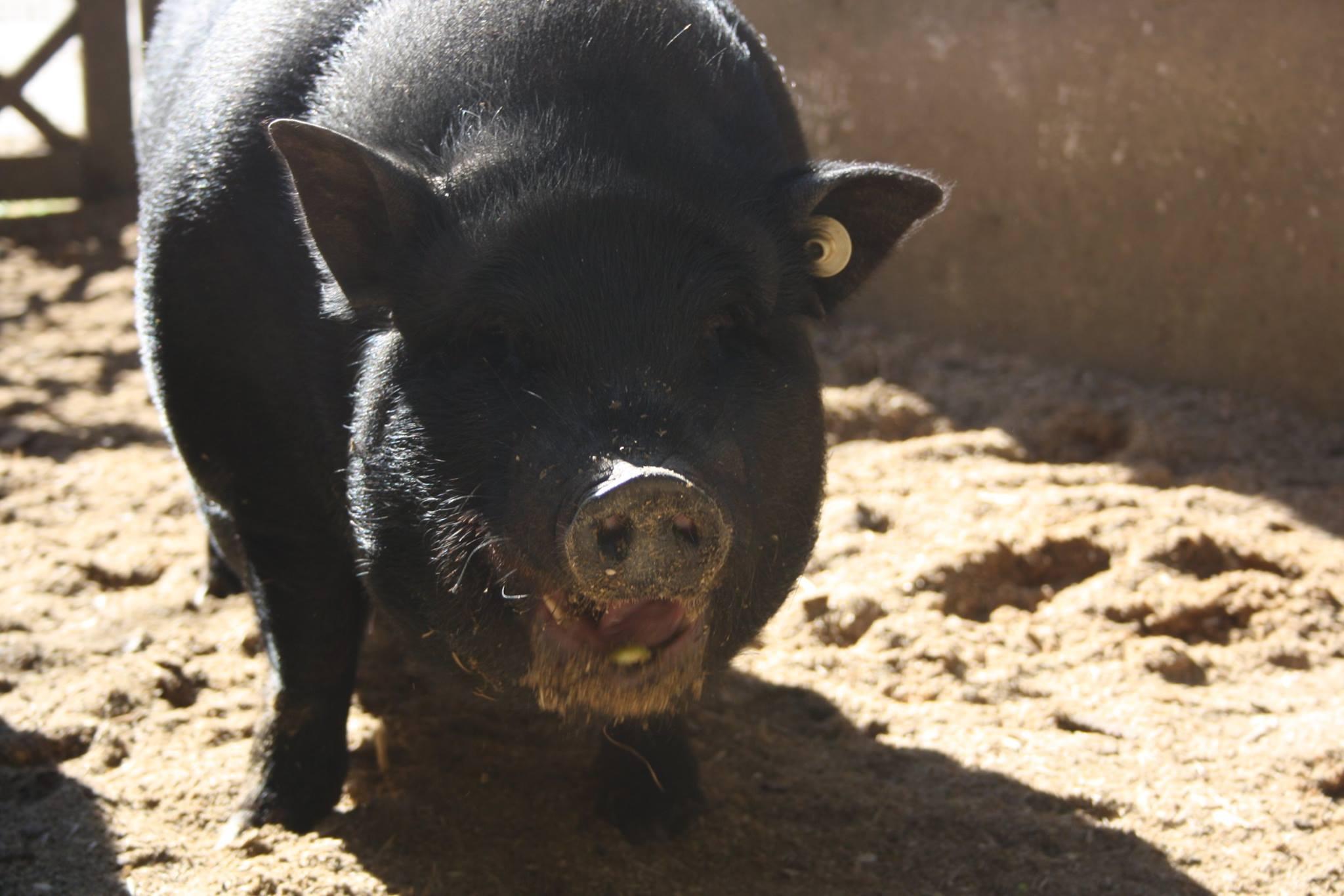 speedy Unterstützen Sie den Tierschutzhof Wardenburg