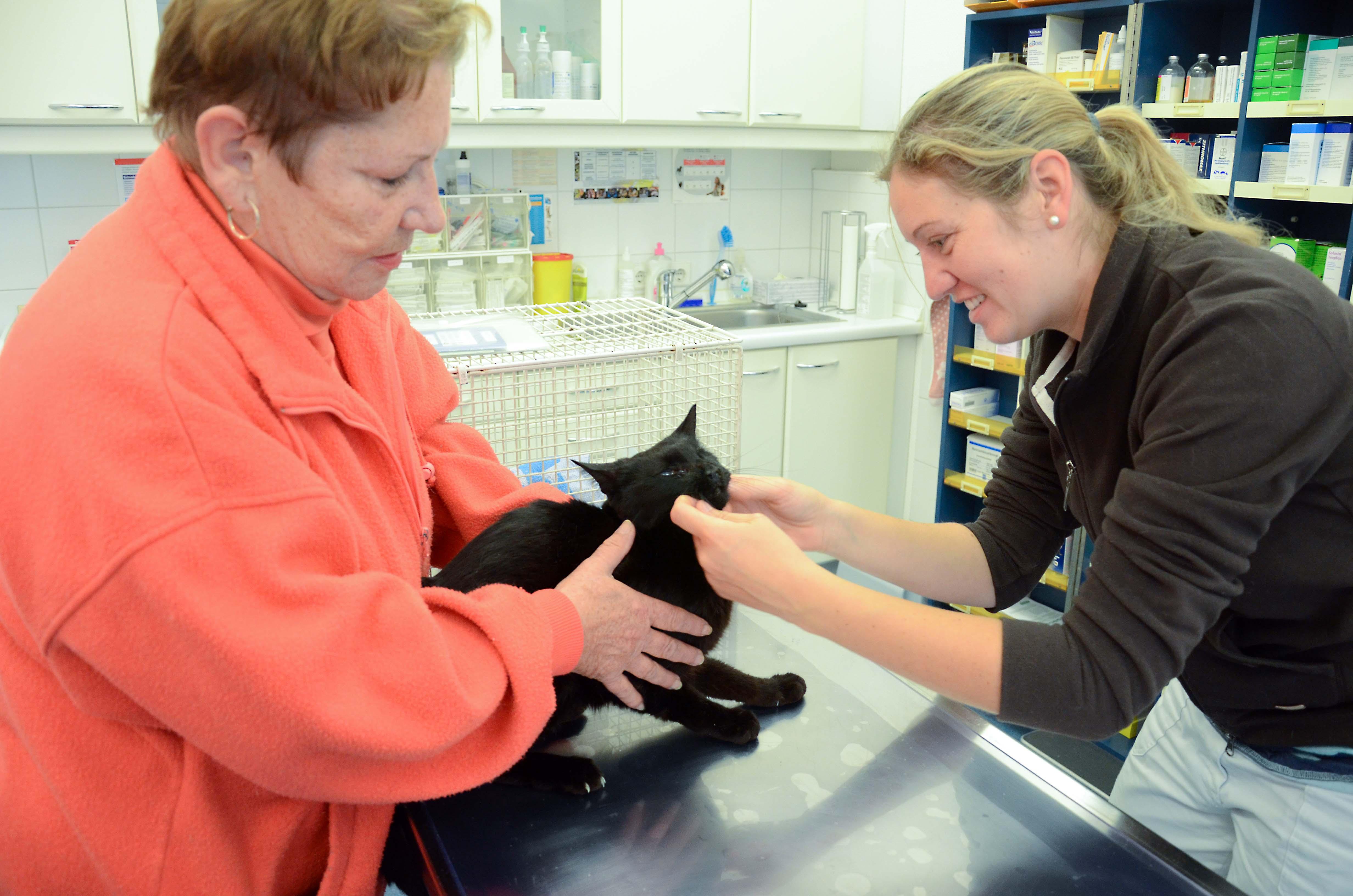 KSM_Tierarzt04 Unterstützen Sie die Katzenstation München