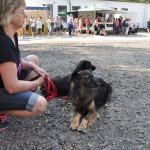 DSC_5049-2-150x150 Tierheimfest – 20 Jahre Tierschutzliga-Dorf