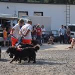DSC_5190-1-150x150 Tierheimfest – 20 Jahre Tierschutzliga-Dorf