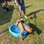 DSC_5195-1-150x150 Tierheimfest – 20 Jahre Tierschutzliga-Dorf