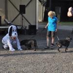 DSC_5302-1-150x150 Tierheimfest – 20 Jahre Tierschutzliga-Dorf