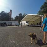 GOPR8069-Kopie-1-150x150 Tierheimfest – 20 Jahre Tierschutzliga-Dorf
