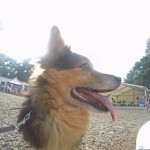 GOPR8091-Kopie-1-150x150 Tierheimfest – 20 Jahre Tierschutzliga-Dorf