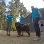 GOPR8095-Kopie-1-150x150 Tierheimfest – 20 Jahre Tierschutzliga-Dorf