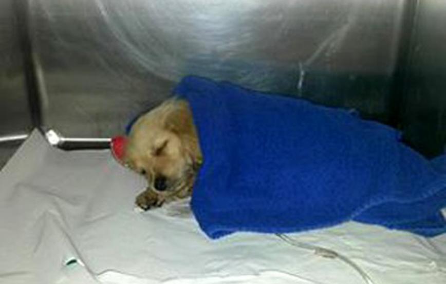 Hund-sissi-ist-eingeschlafen-trauriges Trauriges - Tierheim Wollaberg