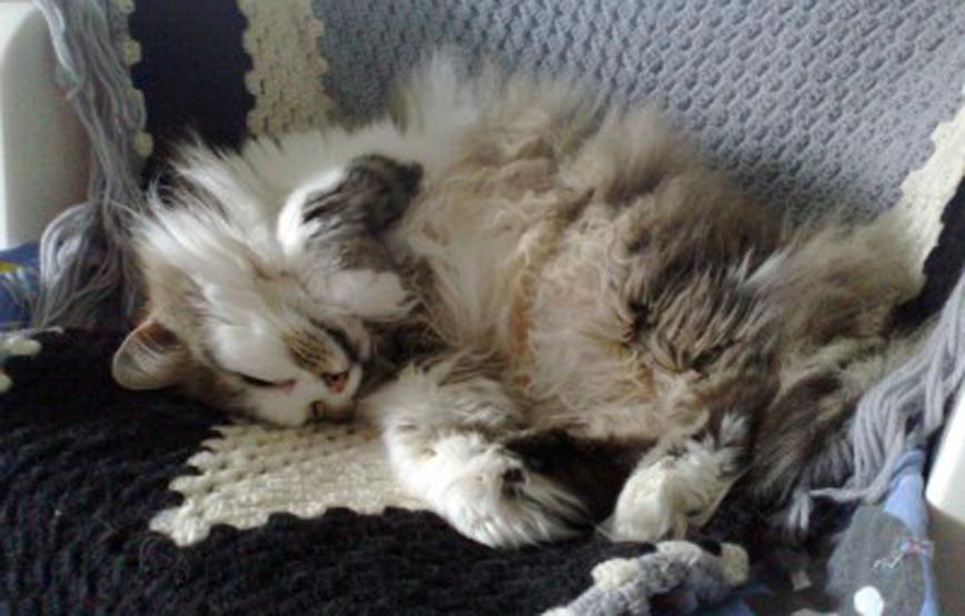 Katze-doro-liegt-auf-wolldecke-trauriges Trauriges - Tierheim Wollaberg