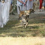 MG_4021-Kopie-1-150x150 Tierheimfest – 20 Jahre Tierschutzliga-Dorf