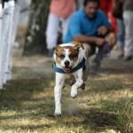 MG_4049-Kopie-1-150x150 Tierheimfest – 20 Jahre Tierschutzliga-Dorf