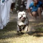 MG_4076-Kopie-1-150x150 Tierheimfest – 20 Jahre Tierschutzliga-Dorf