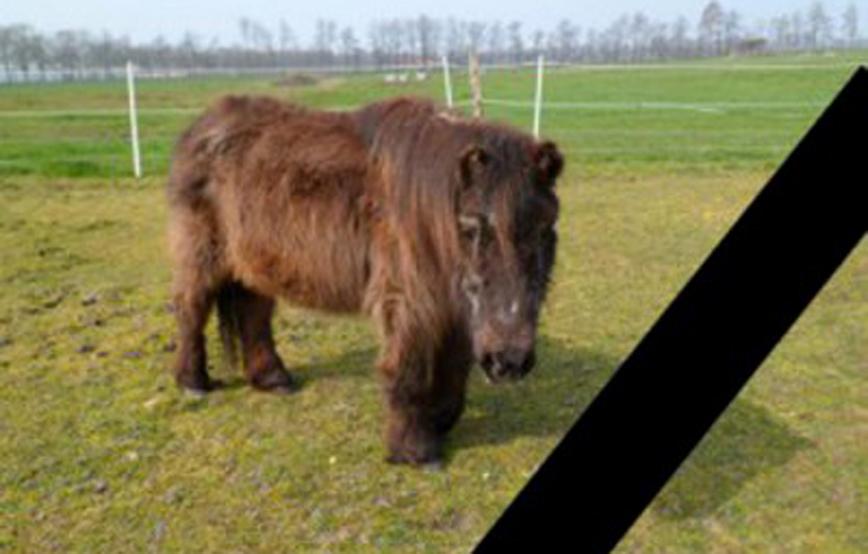Shetty-fatima-steht-auf-wiese-trauriges Trauriges - Tierschutzhof Wardenburg