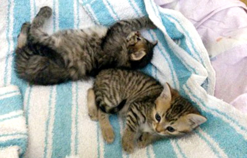 akkuter-notfall-zwei-katzen-auf-decke Unterstützen Sie das Tierheim Wollaberg