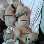 drei-Hunde-Sissi-Decke-Hals-150x150 Sissi hat es nicht geschafft