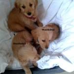 drei-Hunde-Sissi-Korb-Decke-150x150 Sissi hat es nicht geschafft