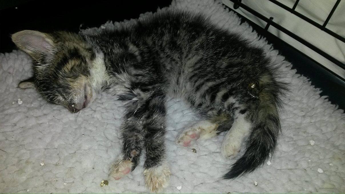 vinzenz Akuter Notfall - Kleiner Bub mit Katzenschnupfen
