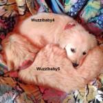 zwei-Hunde-Sissi-bunte-Deck-150x150 Sissi hat es nicht geschafft