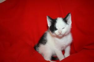 IMG_3552-300x200 6 Kleine Katzen im Karton