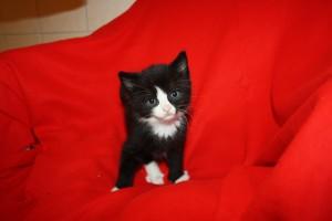 IMG_3556-300x200 6 Kleine Katzen im Karton