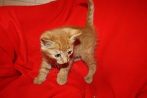 IMG_3560-300x200 6 Kleine Katzen im Karton